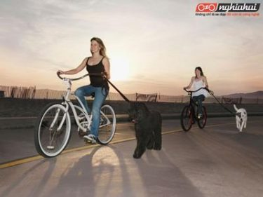 Đạp xe đạp rèn luyện sức khỏe 1