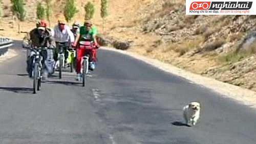 Đạp xe theo đoàn cần chú ý điều gì 2