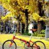 Xe đạp gấp là gì Hướng dẫn cho người mới bắt đầu 2