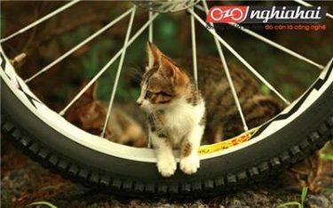 Bạn biết gì về kĩ thuật bảo dưỡng lốp xe 1